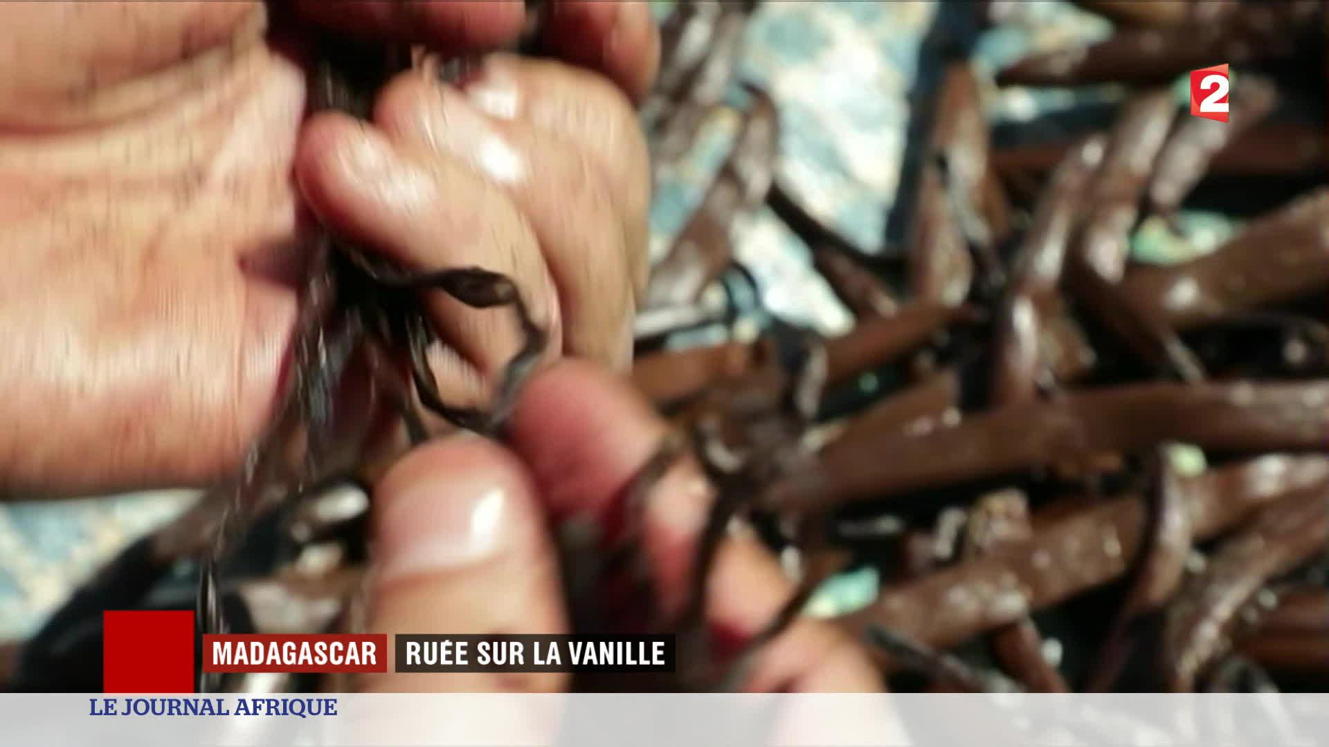Madagascar : premier pays producteur au monde de Vanille